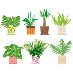 Set of colorful houseplants in pots standing in line. Home decorative plants