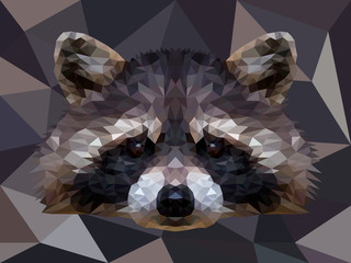 Vector polygonal raccoon isolated on white. Low poly raccoon illustration.