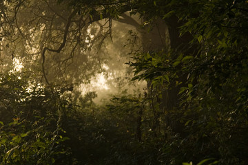 light in jungle at the end of the tunnel. tunnel from the leaves of trees. Morning. White light at the end of the road.