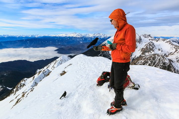 The mountaineer feeding the Alpine chough (Pyrrhocorax graculus) bird perched on his hand on the top of Begunjscica mountain
