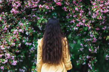 Slim girl walking in spring blooming garden among apple trees with pink flowers. Unrecognizable woman with long curly hair view from the back.