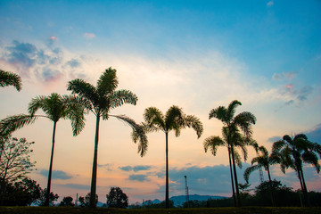 Silhouette coconut trees. One day after sunset  coconut trees in to the sky. Big coconut trees in winter. Silhouette photo concept