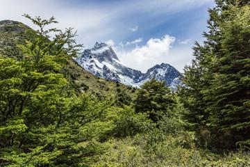 Chile, Región de Magallanes y de la Antártica Chilena, Ultima Esperanza, Torres del Paine, O-Circuit-Wanderung 130km, Wald und Berge