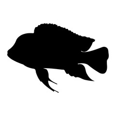 "Isolated ""Bumphead Cichlid"" fish (or Cyphotilapia Frontosa) black silhouette - Eps10 vector graphics and illustration"