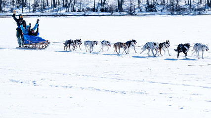 People are having fun riding dog sled on a frozen lake, Minnesota