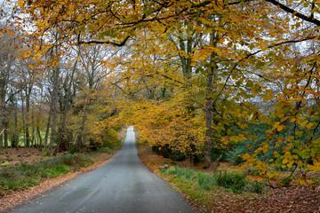 dorset, Autumn