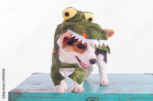 Cute corgi dog cosplay wearing crocodile costume on christmas & Cute corgi dog cosplay wearing crocodile costume on christmas ...