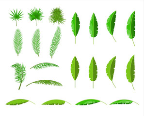 Tropical green leaves. Jungle leaves set.