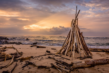 Driftwood of Lydgate Beach