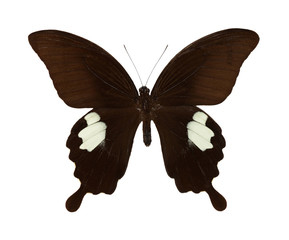 Brown beautiful butterfly