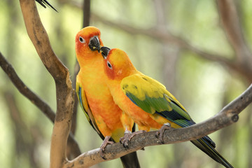 two parrots feed food on branch