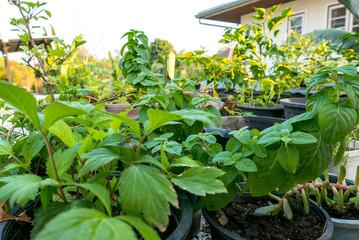 Garten auf einem Dach