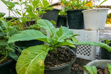 Dachgarten mit Salat