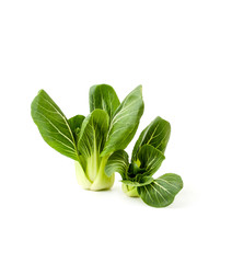 Fresh green salad Pak-choi (Chinese cabbage) on a clean white background. Isolated..
