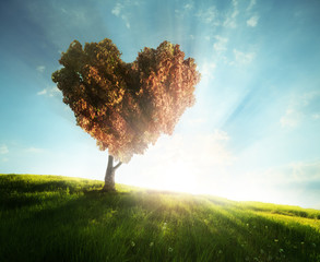 Green field with heart shape tree