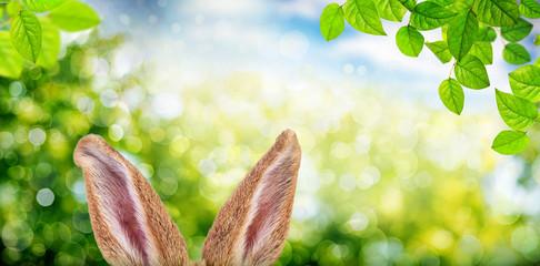 Osterhase Ohren in der Natur