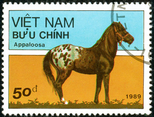 Ukraine - circa 2018: A postage stamp printed in Vietnam show horse of the breed Appaloosa or Equus ferus caballus. Series: Horses. Circa 1989.