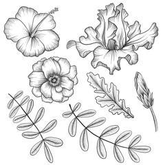 vintage vector floral set