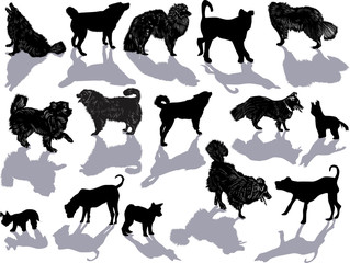 set of fifteen dogs isolated on white