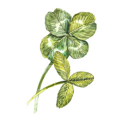 A set of clover leaves - four-leafed and trefoil. Watercolor illustration. Design element Happy Saint Patricks Day