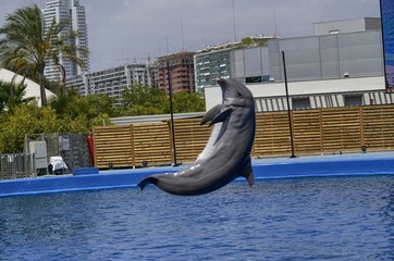 The dolphins perform for the public of the Valencia Dolphinarium