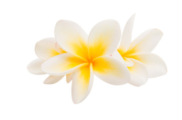 Spoed Fotobehang Frangipani plumeria flower isolated