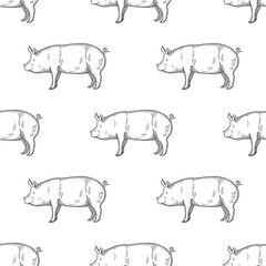 Pig vintage engraved illustration Seamless Pattern background. Vector