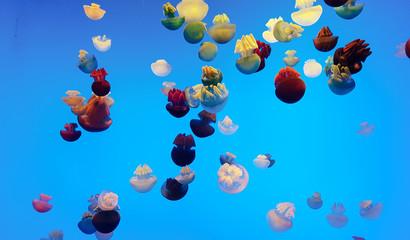 colors jellyfish blubber