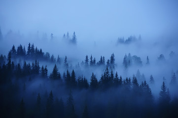 Rows of trees in the fog. Foggy forest, minimalism.