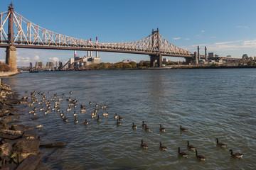 Ed Koch Queensboro Bridge view from Rooseveld Island to Queens