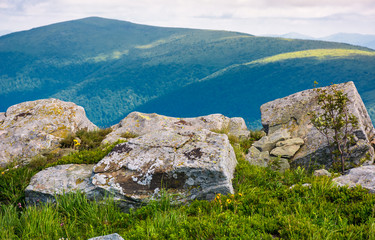 giant boulders on grassy slopes of Polonina Runa. beautiful summer scenery in Carpathian mountains with gorgeous cloudscape