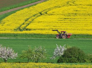 Kulturlandschaft mit Rapsfeld und Traktor