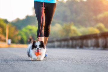 puppy dog running exercise together with woman in the morning