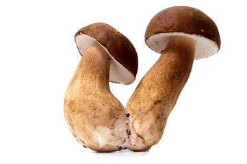 Fresh forest mushroom boletus with a thick mushroom leg and wet cap on a white background food background