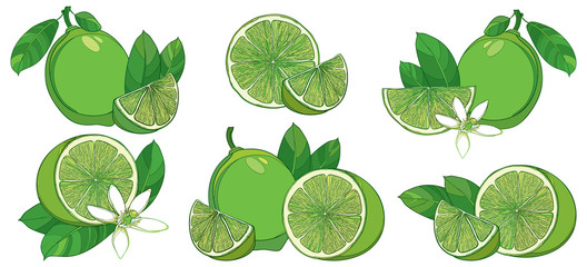 Vector set with outline half and whole fruit, slice, leaf and Lime flower isolated on white background. Composition with green tropical citrus Lime in contour style for exotic summer design.