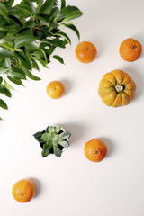 High angle view of succulent plant with oranges and pumpkin over white background