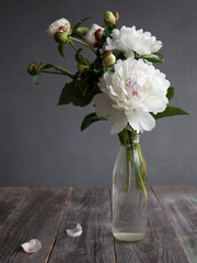 Beautiful white peony flowers in a vase on grey wooden table with copy space for your text. Spring peonies.