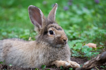Cute rabbit in green grass