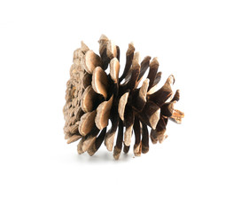 cones various coniferous trees isolated