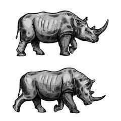 African rhino walking sketch of rhinoceros animal