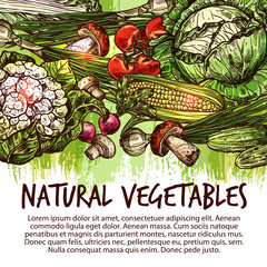 Vegetable poster with veggies and mushroom sketch