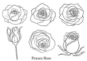 Rose vector set by hand drawing.Beautiful flower on white background.Rose art highly detailed in line art style.France rose for wallpaper.