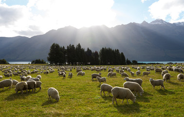 South island scenery of New Zealand