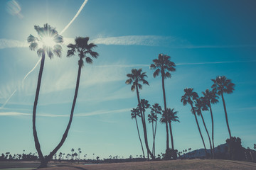 sky shining through palm trees, paradise landscape Wall mural