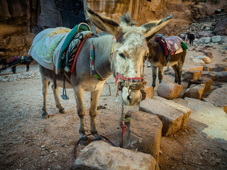 Donkey near the Shrine in Petra