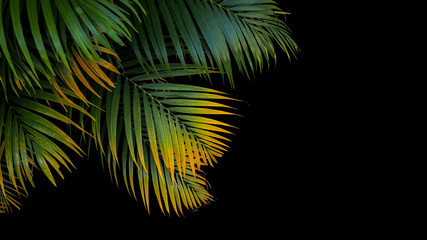 Canvas Prints Palm tree Tropical palm leaves, green and yellow palm fronds on black background.