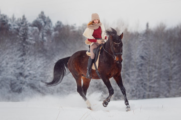 Close-up of horse with gallop rider is riding across field in winter forest. Equestrian sport.