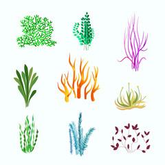 Vector set of underwater plants. Underwater plant, ocean and sea plant for aquarium