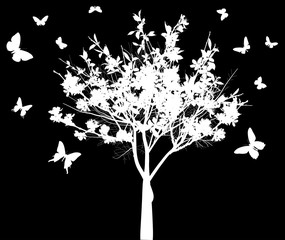 spring white tree and butterflies isolated on black