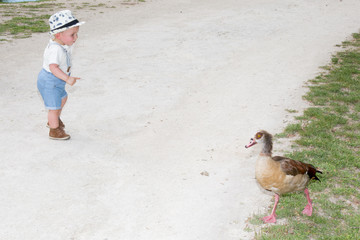 young boy playing in the park with a duck wild